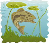 Largemouth bass jumping — Stock Vector