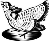 Prairie Chicken Hen Retro — Stock Vector