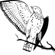 Broad winged hawk perched on branch — Imagen vectorial