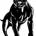 Pitbull dog — Stock Vector #27773927