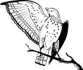 Szeroką skrzydlata jastrząb siedzący na gałęzi — Wektor stockowy