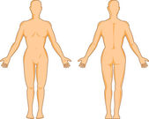 Human anatomy showing a female standing — Stock Vector