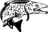 Spotted speckled trout fish jumping — Stock Vector