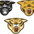 ������, ������: Panther Big Cat Growl Head Isolated
