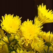 Chrysanthemums — Stock Photo #14180475