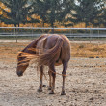 Horse — Stock Photo #14562835