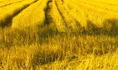 Road in the fields — Stock Photo