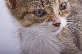 Junge katze — Stockfoto