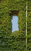 Window — Photo