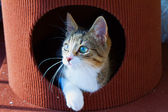 Cat in a hole — Stock Photo