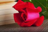 Rose ve kitap — Stok fotoğraf