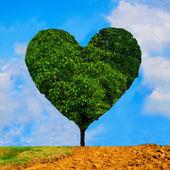 Drzewo w kształcie serca — Zdjęcie stockowe