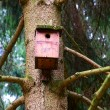 Birds house — Foto Stock