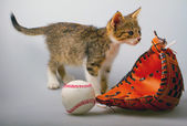 Cat and baseball — Stock Photo