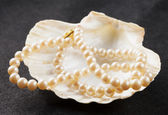 Pearls in shell — Stockfoto