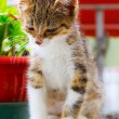 Stock Photo: Small Cat