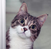 Surprised cat — Stock Photo