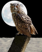 Owl and moon — Stock Photo
