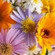 Stock Photo: Background of flowers