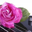 Rose over bass — Stock Photo #46552763