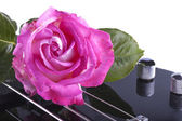 Rose over bass — Stock Photo