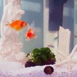 Aquarium — Stock Photo #50197177