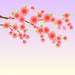 Japanese Sakura Cherry Tree — Stock Vector
