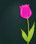 Pink Bright Tulip on Dark Black Background — Stok fotoğraf