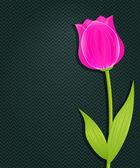 розовый тюльпан светлый на темном фоне черный — Стоковое фото