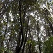 Looking Up Into Trees Rain Forrest Hawaii — Stock Photo