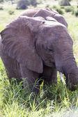 象 — ストック写真