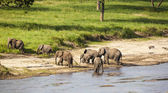 Elephant herd at the water hole — Stock Photo