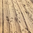 Tyre Animal Tracks In The Sand — Stock Photo