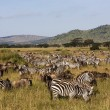 Herd of animals during migration in Serengeti national park Tanzania — Stock Photo