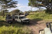 Safari cars — Stock Photo