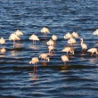 Flamingos In A Lake In Africa — Stock Photo