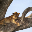 Lion on a branch — Stock Photo #31425943