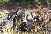 Wild african vultures — Stock Photo