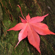 Autumn leaf — Stock Photo #19247217