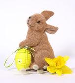 пасхальный кролик — Стоковое фото