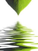 Leaf pattern background — Stock Photo