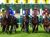 York yarışları — Stok fotoğraf