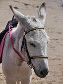 Donkey on beach — Photo