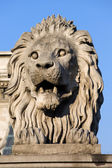 Lion Sculpture on Chain Bridge in Budapest — Stock Photo