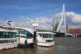 Pont erasmus dans le centre-ville de rotterdam — Photo
