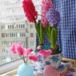 Advents composition with a cyclamens and hyacinths — Foto de Stock