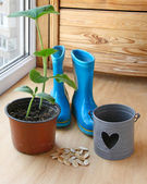 The concept started gardening. Sowing seeds to seedlings — Foto de Stock