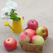 Basket of apples and white phloxes on a canvas background - Stock Photo