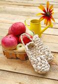 Harvest of apples — Stock Photo