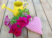 Bouquet of petunia and heart — Stock Photo